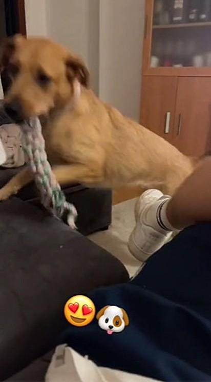 Pepa levou o seu brinquedo até a cachorrinha que resmungava.