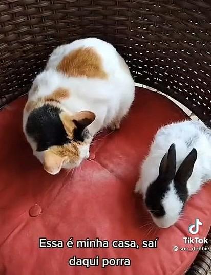 Um dos gatos fica observando a coelhinha com medo