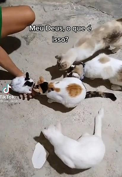 Os quatro felinos estão cheirando a coelhinha