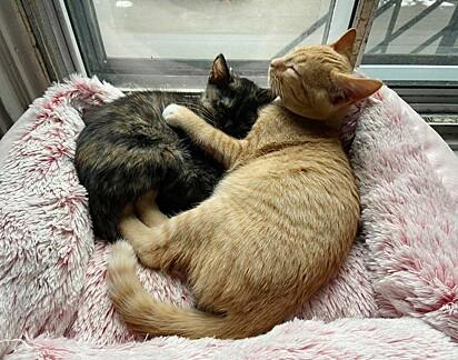Uma fofura vê-los dormindo abraçadinhos.