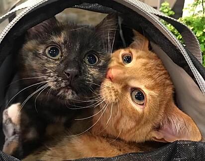 O abrigo busca por uma pessoa que adote a dupla.