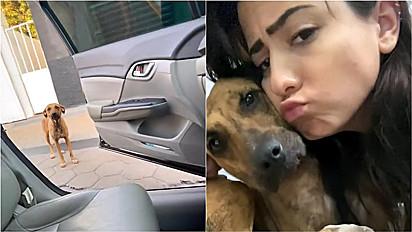 Mulher adota cachorra que encontrou na saída da academia.