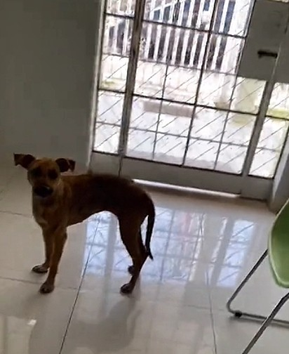 A jovem levou a cachorrinha no médico veterinário.