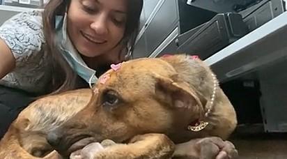 A cachorrinha foi adotada por Larissa Borges Ferreira.