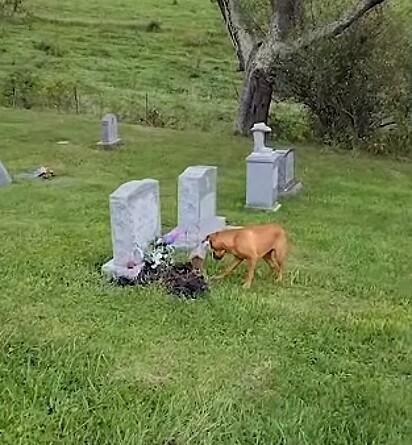 O cachorrinho Zola tem um imenso amor pela sua avó falecida.