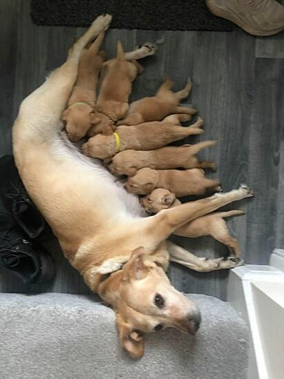 A mamãe Bela com os seus filhotes.
