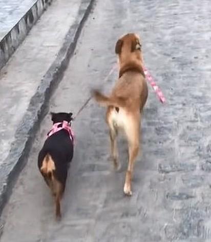 Luna está levando Nutella para passear