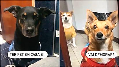 Cães acompanham dona até na hora de ir no banheiro.
