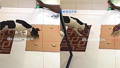 Cachorro se diverte com dono jogando jogo da velha.