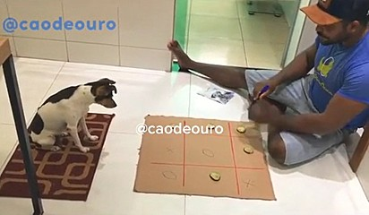 O cachorrinho fica atento aguardando a sua vez de jogar.