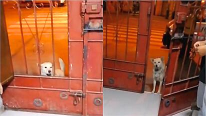 Comerciante permite entrada de cachorro de rua na sua loja para alimentá-lo.