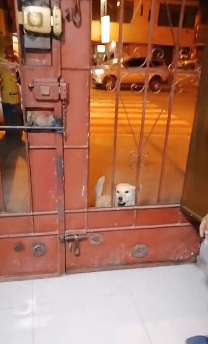 O cachorrinho ficou espiando a loja pelas grades da porta.