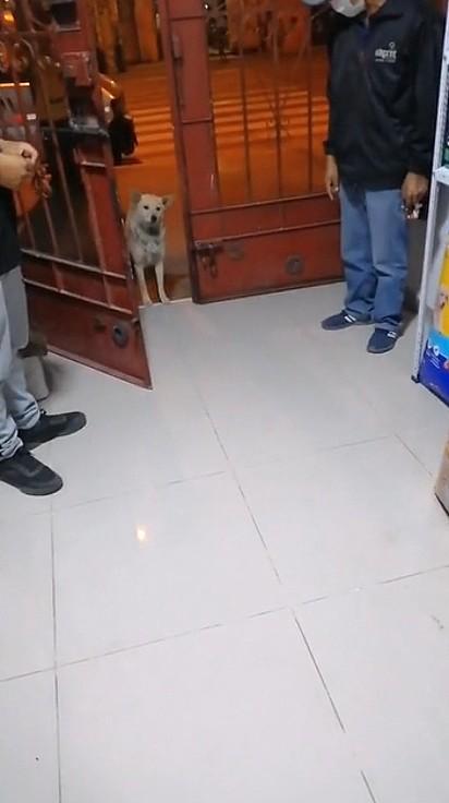 O dono do estabelecimento abriu a porta para permitir o cãozinho entrar e deliciar com um pote de ração.