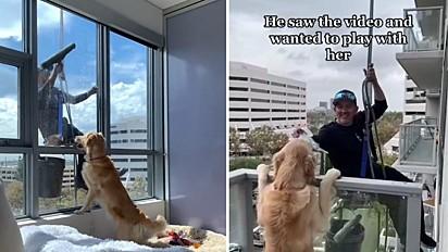 Cachorra vira amiga de homem que foi limpar a janela de seu prédio