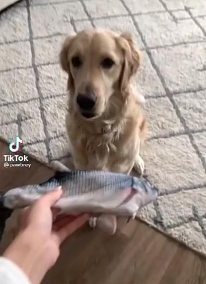 Aubrey está pegando seu peixinho