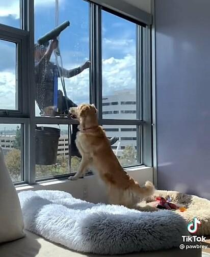 Aubrey está feliz em ver o limpador de vidros