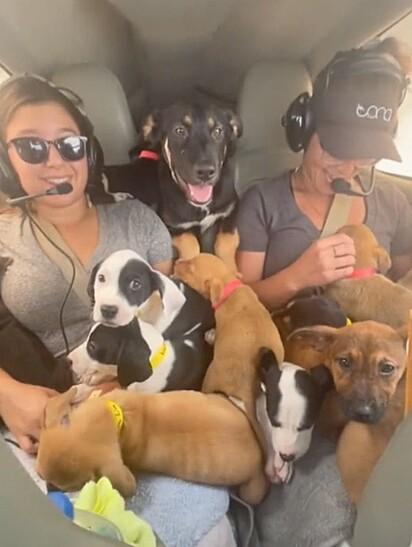 Duas mulheres estão rodeadas pelos cães