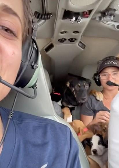 Cassandra está segurando alguns cães no colo