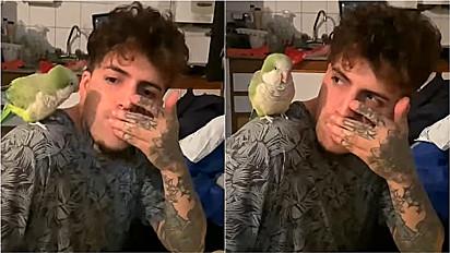 Pássaro faz dueto com rapaz e juntos desenvolvem performance musical.