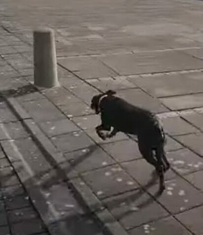 Sapho está correndo em direção ao poste