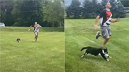 Gatinho faz competição de corrida com os seus donos.