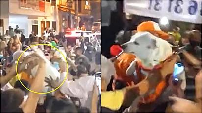 Cachorro comunitário desaparecido é recebido com grande festa pela população.