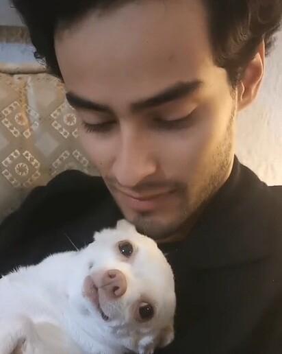 Pinky, da raça chihuahua, adora receber um carinho do noivo da tutora.