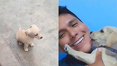 Homem resgata cachorrinha abandonada por vizinho.