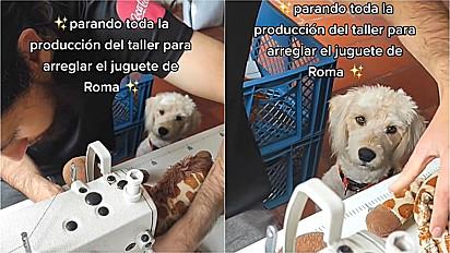Homem interrompe a produção da empresa para costurar o brinquedo favorito da sua cachorrinha.