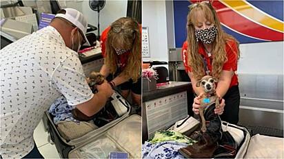 Bagagem é barrada em aeroporto por excesso de peso e o motivo é o cão da família escondido.