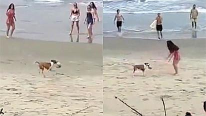 Cachorro dribla banhistas que tentam resgatar a bola que o peludinho roubou.