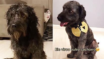 Cachorro abandonado em mudança passa por transformação ao ganhar lar amoroso.