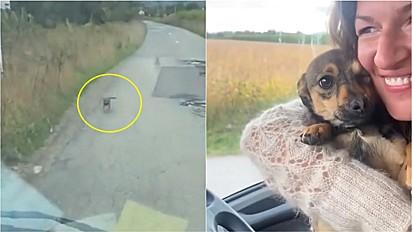 Cachorro abandonado na estrada corre em direção de veículo para pedir ajuda.