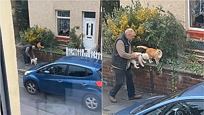 Homem interrompe caminhada para o seu cão interagir com gato.