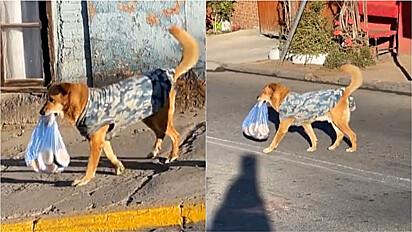 Cão é flagrado carregando saco de pão na boca para levar para casa.