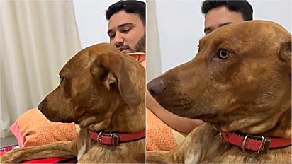 Homem tem conversa séria com seu cachorro sobre saber valorizar as coisas.