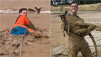 Jovens unem forças para resgatarem canguru atolado em lamaçal.