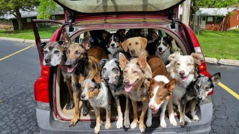 Conheça o primeiro carro pensado especialmente para famílias com animais de estimação (INCRÍVEL)