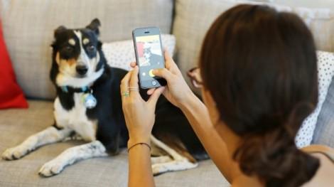 6 dicas para tirar fotos profissionais do seu Pet