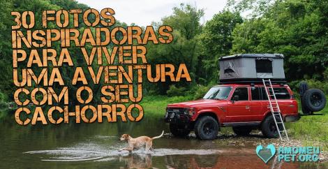 30 fotos inspiradoras para viver uma aventura com o seu cachorro