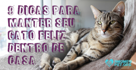 9 dicas para manter seu gato feliz dentro de casa