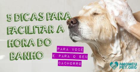 5 dicas para facilitar a hora do banho para você e para o seu cachorro