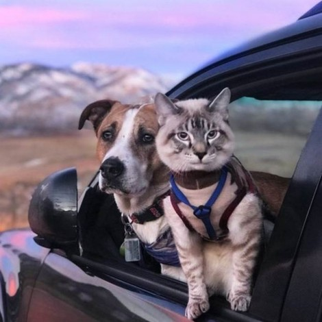 Cachorro e gato formam dupla aventureira em viagens pelos EUA