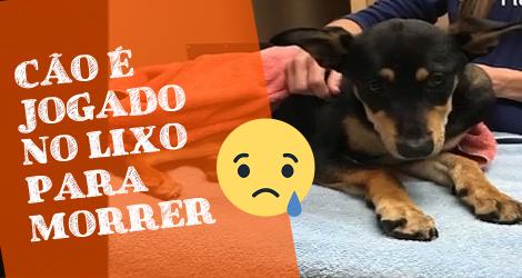 A segunda vida de um cachorro que foi jogado na lixeira. Se emocione!