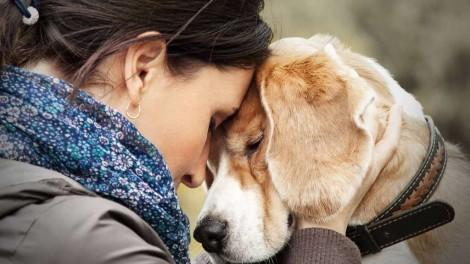 Segundo estudo, amor entre cachorro e dono é o mesmo de mãe e filho