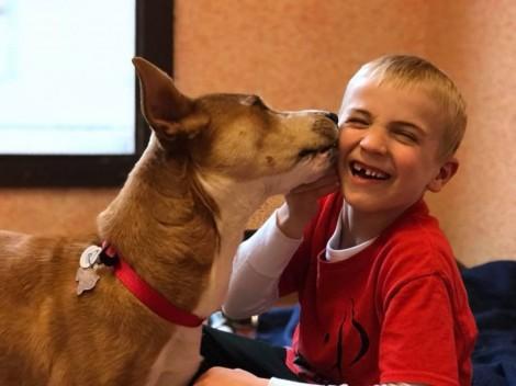 Menino de 6 anos ajudou a salvar mais de 1.000 cães de serem sacrificados em abrigo