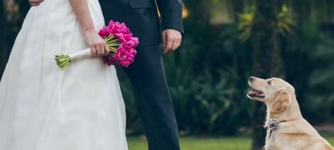 Seu pet no seu casamento? Inspire-se com essas fotos!
