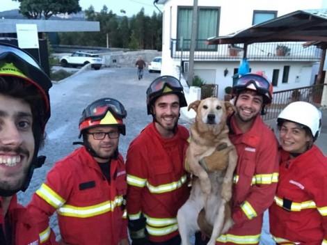 Bombeiros resgatam cachorro de um poço em Portugal