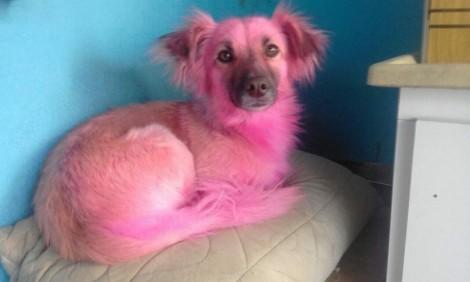 Vovó usa shampoo errado sem querer e deixa cachorrinho rosa