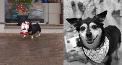 Morre Pituco, cachorrinho que ficou famoso por buscar ração em Pet Shop (Relembre o Vídeo)